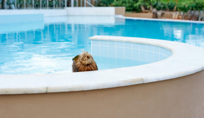 242 – Pool