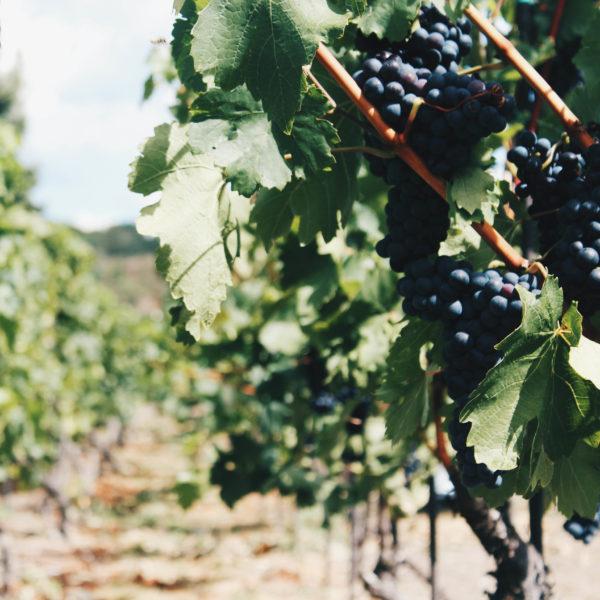 Village Heights – Vineyards (1)-1